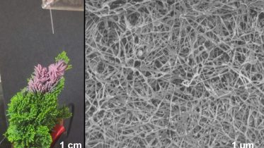 Plant-Based Nanowire Spray Could Be Used to Improve N95 Mask Filters, Energy Harvesters