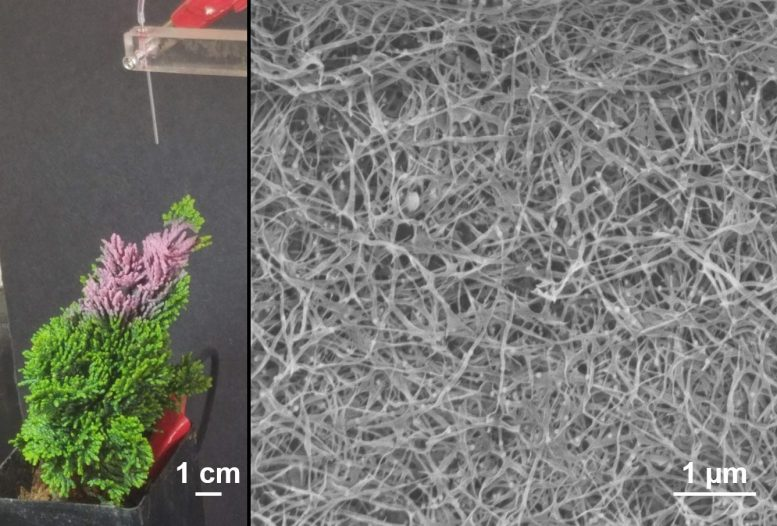 Plant-Based Nanowire Forest Spray