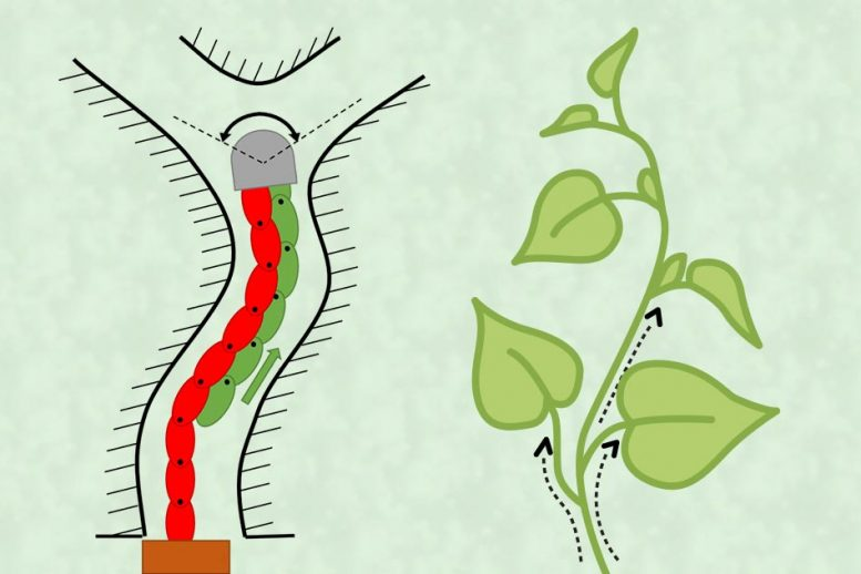 Plant Growth Functional Elements
