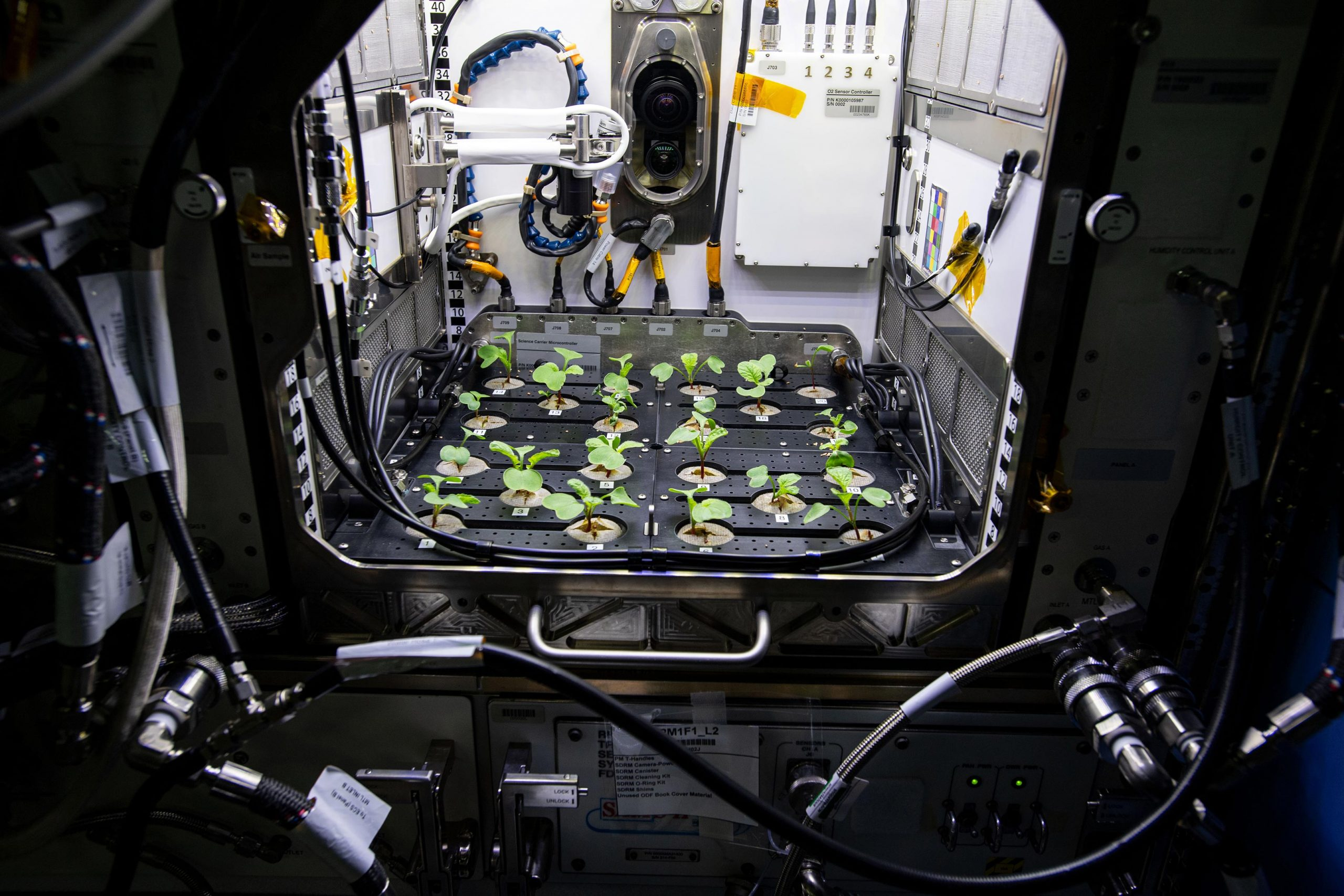 Astronauts Grow Radishes in Second Advanced Plant Habitat Experiment in Space - SciTechDaily