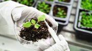Plant Science Concept