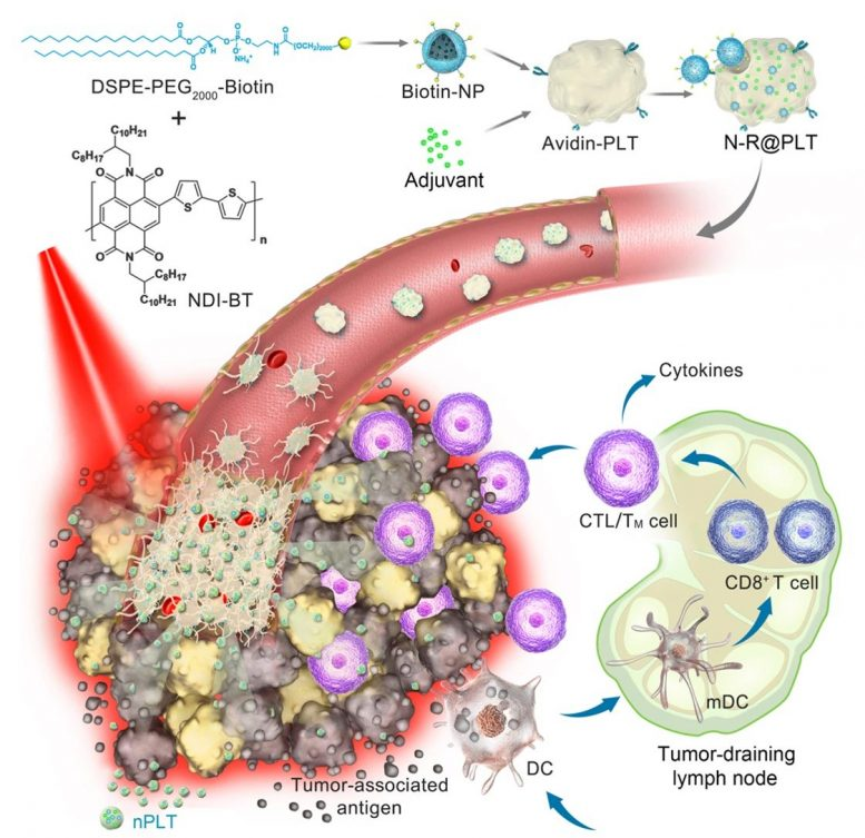 Platelet-Based Formulation and Anticancer Application in Photothermal-Immunological Combined Therapy
