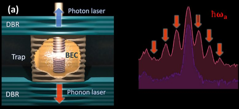 Polariton BEC and Phonon Lasing