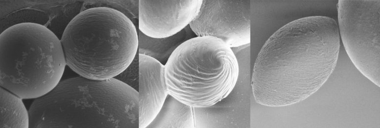 Polymer Scanning Electron Microscopy Images