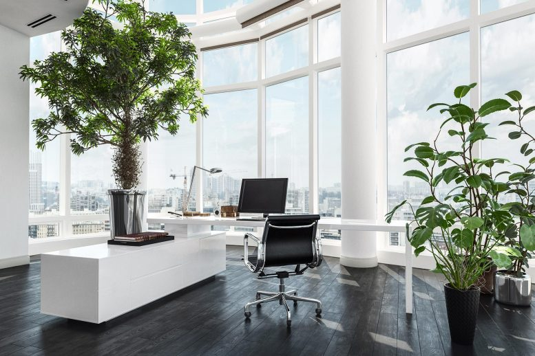 Potted Plants Office