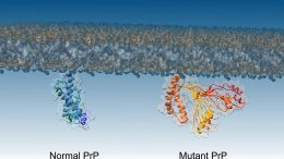 PrP Proteins