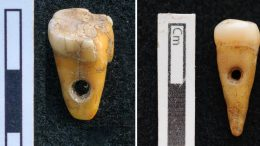 Prehistoric Human Teeth Used as Pendants
