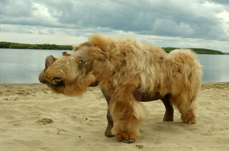 Preserved Baby Woolly Rhinoceros Named Sasha