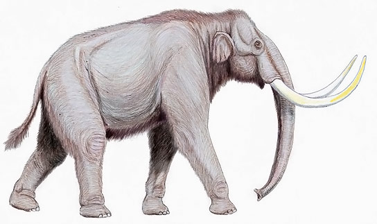 Preserved Mammoth Found with Flowing Blood