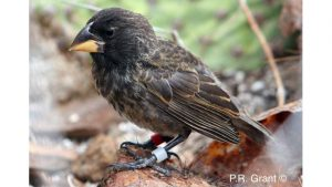 Princeton Study Shows New Species Can Develop in as Little as 2 Generations