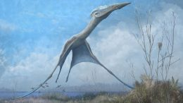 Pterosaur Launches Into Flight