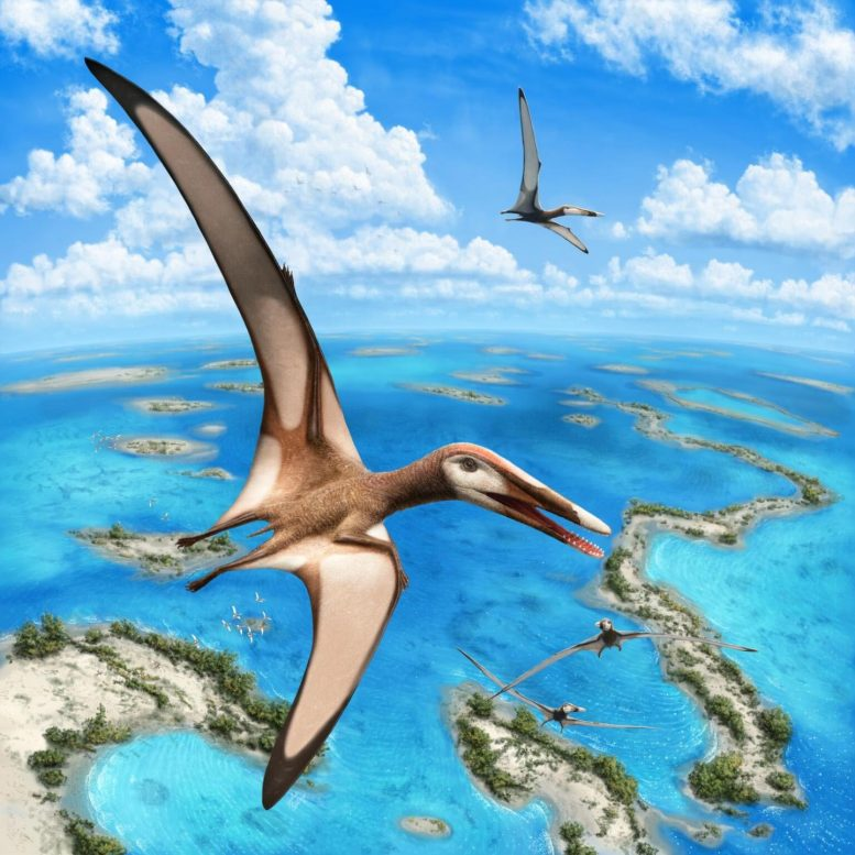 Pterosaurs Illustration
