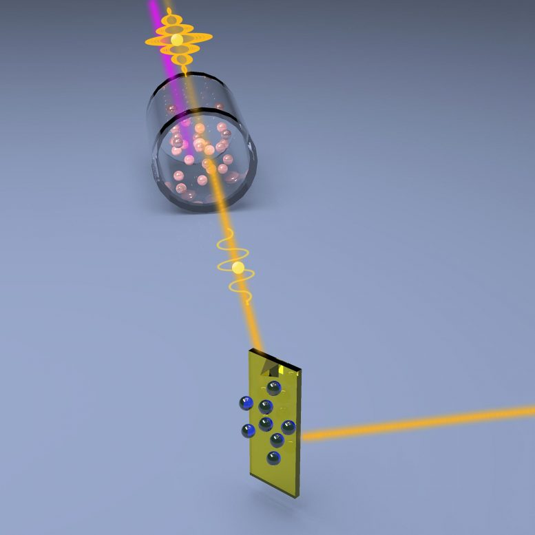Quantum Light Squeezes Noise Out of Microscopy Signals