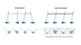Quantum Objects Synchronize Without Any External Influence