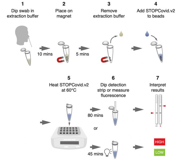 Rapid COVID 19 Test Steps
