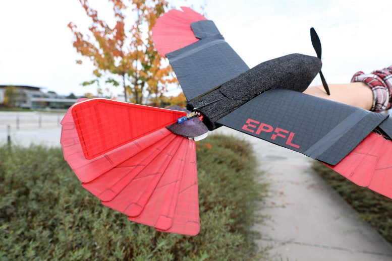 Raptor Inspired Drone Morphing Wing Tail