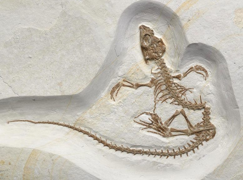 Recently Discovered Fossil Shows Transition of a Reptile From Life on Land to Life in the Sea