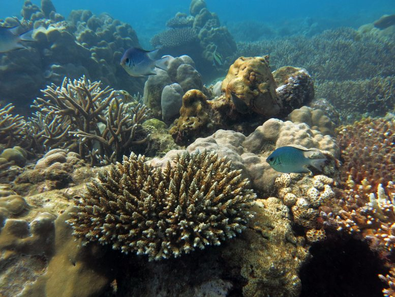 Recovering Reef in Seychelles