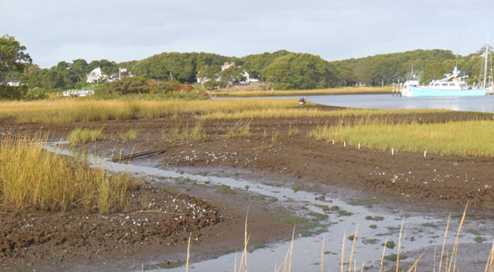 Recreational fishing is a major contributor to the rapid decline of important salt marshes