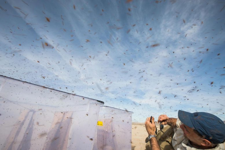 Releasing and Recapturing Flies in the Mojave Desert