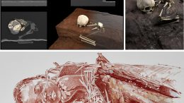 Remains and Burial Reconstructions