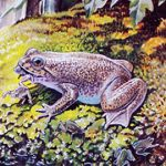 Researchers Create Cloned Embryos of an Extinct Frog