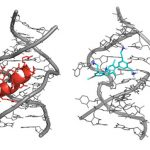 Researchers Design Synthetic Molecules Capable of Blocking the AIDS Virus and Its Replication