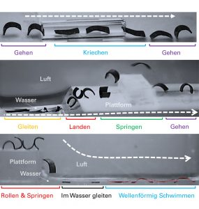 Researchers Develop Small-Scale Soft-Bodied Multimodal Locomotion