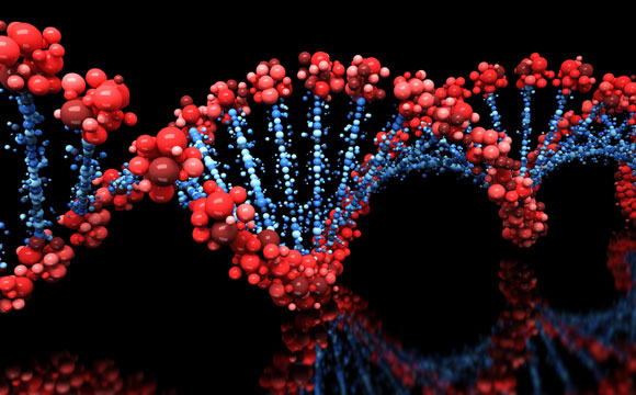 Researchers Discover Genes for a Longer Healthier Life