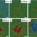 Researchers Discover Mechanism Behind Solid-Solid Phase Transitions