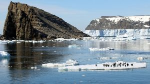 Researchers Discover Supercolony-of Adelie Penguins in Antarctica