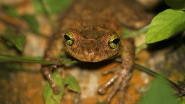 Researchers Examine Human Threats Amphibian Family Tree