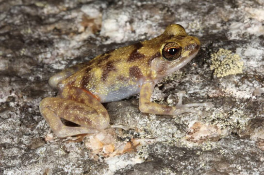 Researchers Find Three New Vertebrate Species