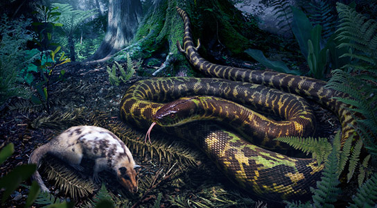 Researchers Generate a Family Tree for Living and Extinct Snakes