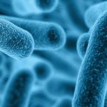 Researchers Identify Gut Bacteria That Protects Against Food Allergies