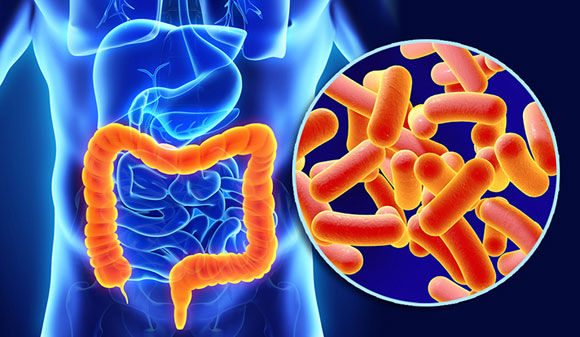 Researchers Identify Key Protein That Contributes to Colitis