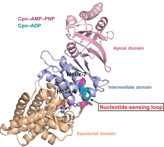 Researchers Identify Structure of Key Control Element Behind Protein Misfolding
