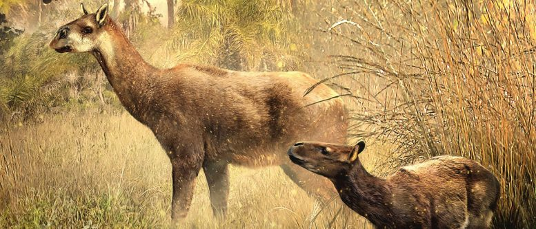 Researchers Identify Two New Ancient Mammals in Bolivia Dig