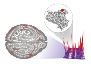 Researchers Identify another Piece in the Parkinson's Disease Pathology Puzzle