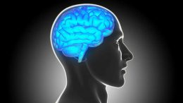 Researchers Map Brain Lesions for Clues to Criminal Behavior