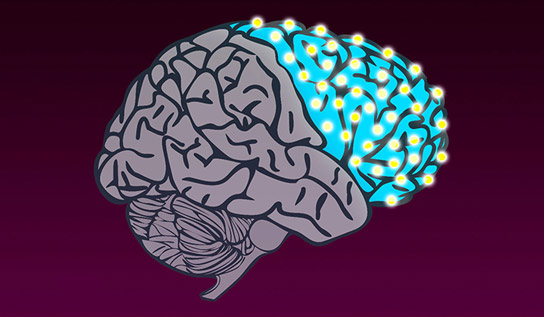 Researchers Map Switches That Shaped the Evolution of the Human Brain