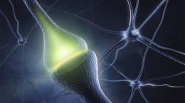 Researchers Observe Signs of Synaptic Plasticity Emerging in a Living Brain