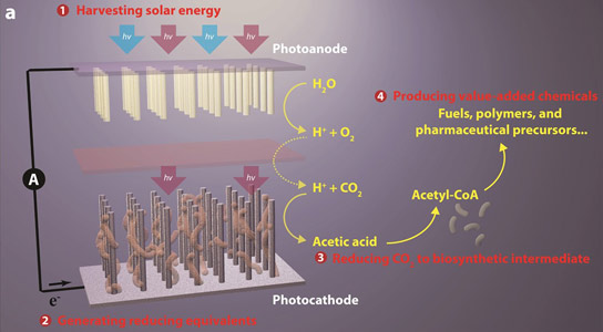 Researchers Perform Solar-powered Green Chemistry with Captured CO2