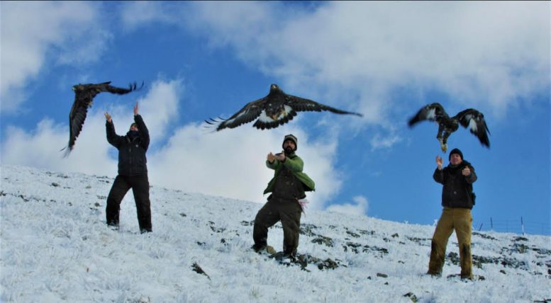 Researchers Release Eagles
