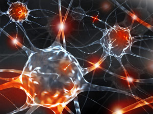 Researchers Reprogram Other Cells to Become Nerve Cells Directly in the Brain