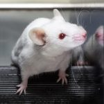 Researchers Reversed the Effects of Alzheimers Disease in Mice