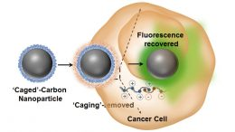 Researches Show That Luminescence Switchable Carbon Nanodots Follow Intracellular Trafficking and Drug Delivery
