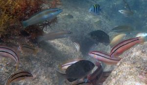 Researchers Track Dynamic Changes in Marine Life