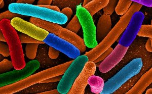 Researchers Turn Engineered Bacteria into a Source of Natural Energy