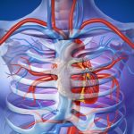 Researchers Uncovered Molecular Pathway to Grow New Arteries